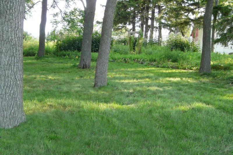 No Mow Lawn