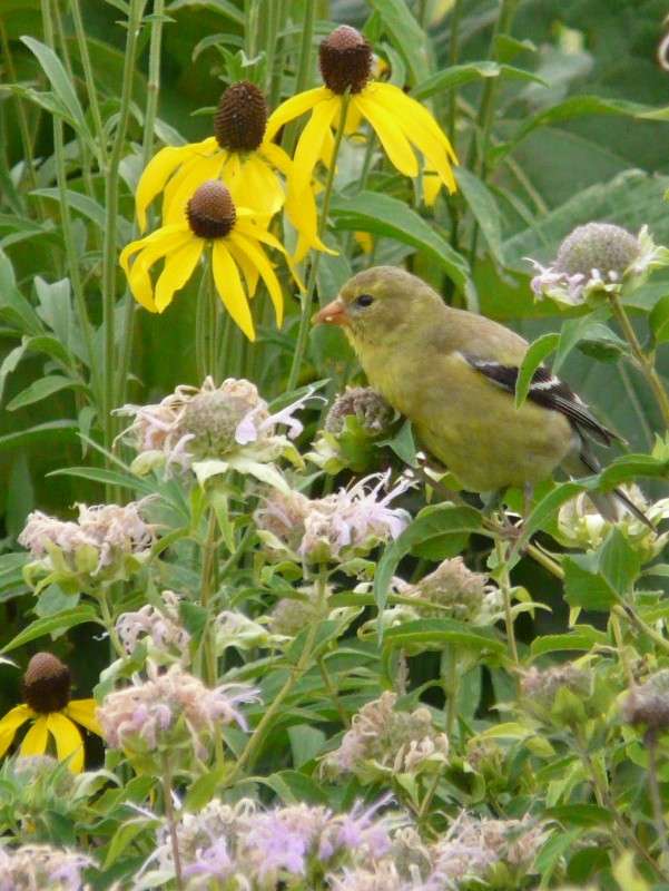 Birds love native plants