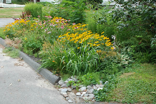 The Beneficial Beauty Of Rain Gardens The Native Plant
