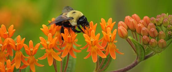 planting-for-pollinators