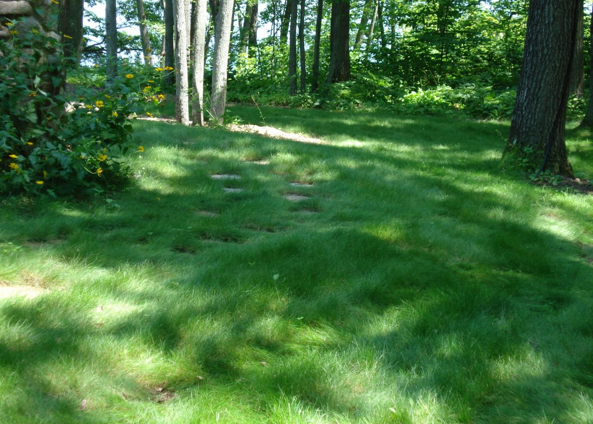 How To Keep Your No Mow Looking Its Best