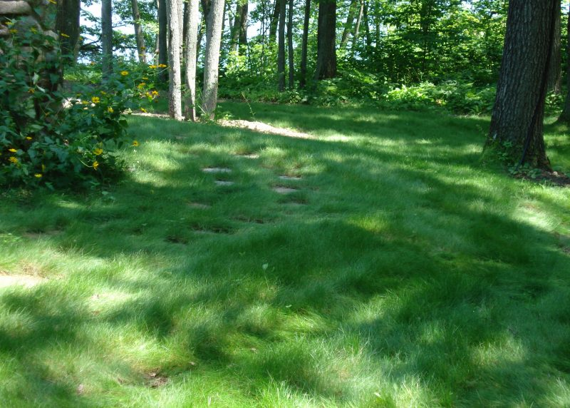How to Keep Your No Mow Looking Its Best – The Native Plant
