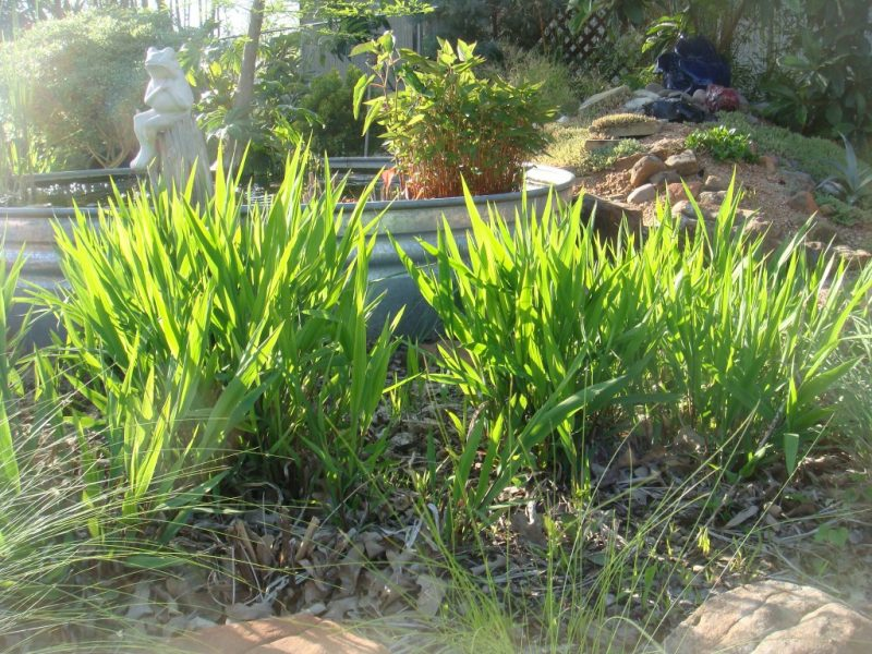 Native Grasses From Short To Tall The Native Plant Herald