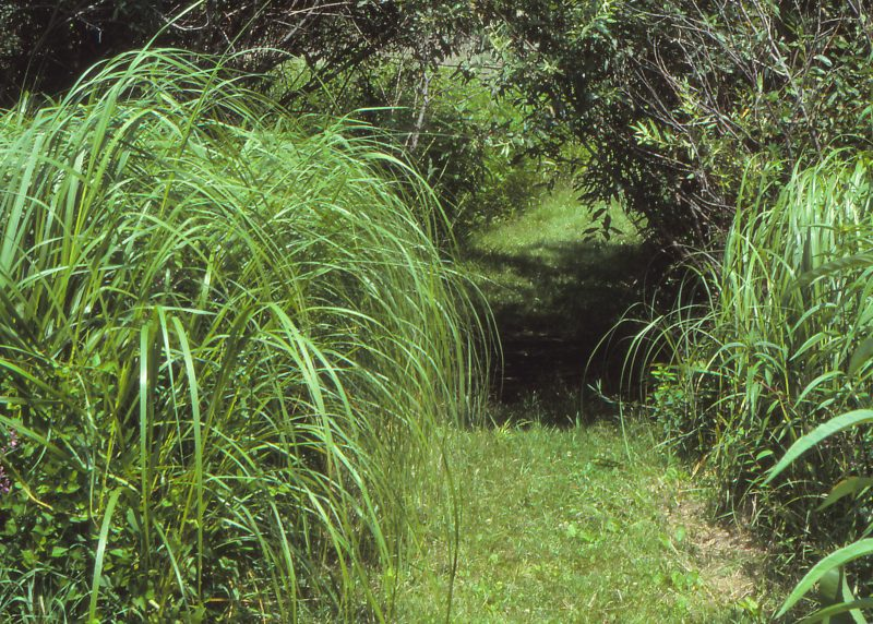 Native Grasses – The Tall and Short of It – The Native Plant