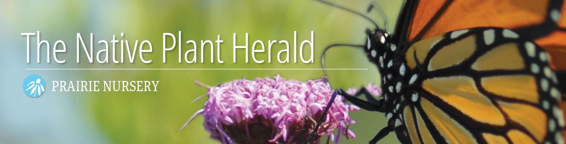 The Native Plant Herald